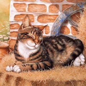 Katt tegelstenar