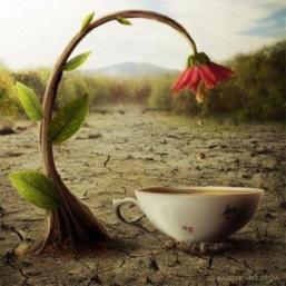 Blomma kopp