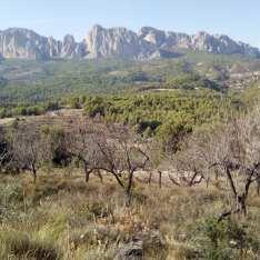 Hästridning Spanien 3