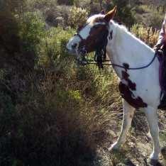 Hästridning Spanien 5