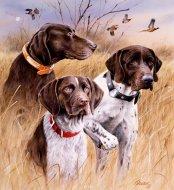 Bortsprungen hund