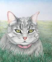 Bortsprungen katt